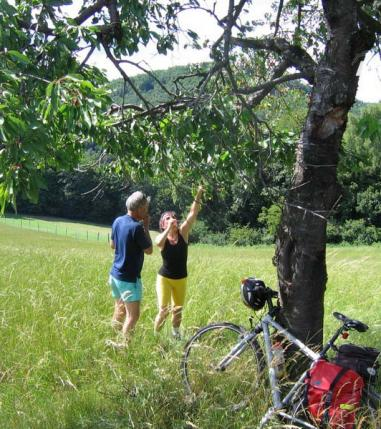 Vineyard Bike Trails in 3 Countries